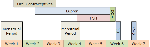 Embryo Banking Procedure Timeline