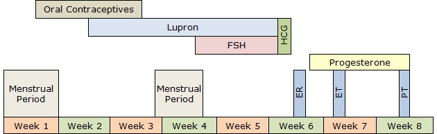 Long IVF Procedure Timeline