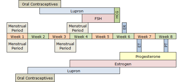 Donor Egg IVF Procedure Timeline