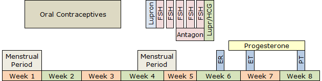 Short IVF Procedure Timeline